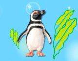 [海のどうぶつ〈水族館の人気者〉] 8.マゼランペンギン