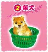 [ぎゅうぎゅうペット] 2.柴犬
